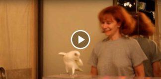 "Попугай танцует ""Ламбаду"". Умничка!"