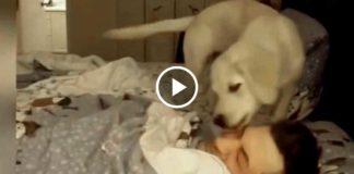 Симпатичные собаки будят своих хозяев