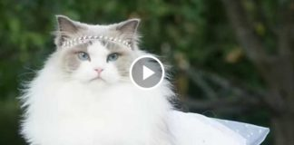Знакомьтесь! Принцесса Аврора - победительница конкурса красоты.