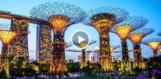 «Сады у залива» – удивительный парковый комплекс в Сингапуре