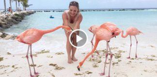 Розовые фламинго спокойно прогуливаются по пляжу. Какая прелесть!