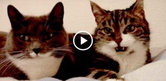 Тайные переговоры 2-х очаровательных кошек