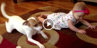 Собака Бадди учит малышку ползать!