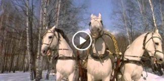Замечательная песня «Три белых коня» из фильма «Чародеи»