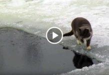 Кот Рыбачок... Какой добытчик, Умница!