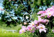 Сад мечты... Волшебная музыка и великолепие цветов!