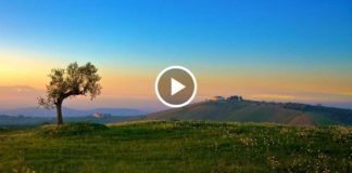 Волшебная мелодия «La califfa» от короля саундтреков!