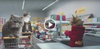 Как герои вирусных «кото-видео» посетили супермаркет