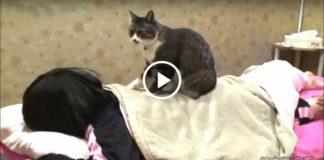Чудный кот-массажист работает в СПА-салоне!