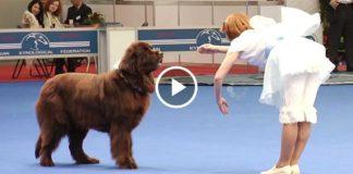 «Танец куклы» дрессировщицы и её пса вызвал восторженные крики зрителей