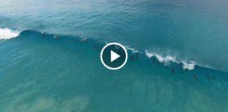 Стая дельфинов ловит волну у побережья Эсперанса