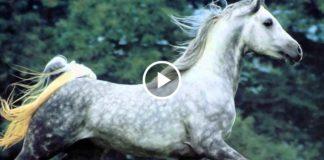 Прекрасная мелодия Флейты и грациозные Лошади! Какая прелесть!