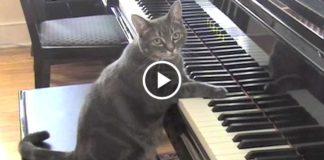 Симфония кошки Норы с оркестром!