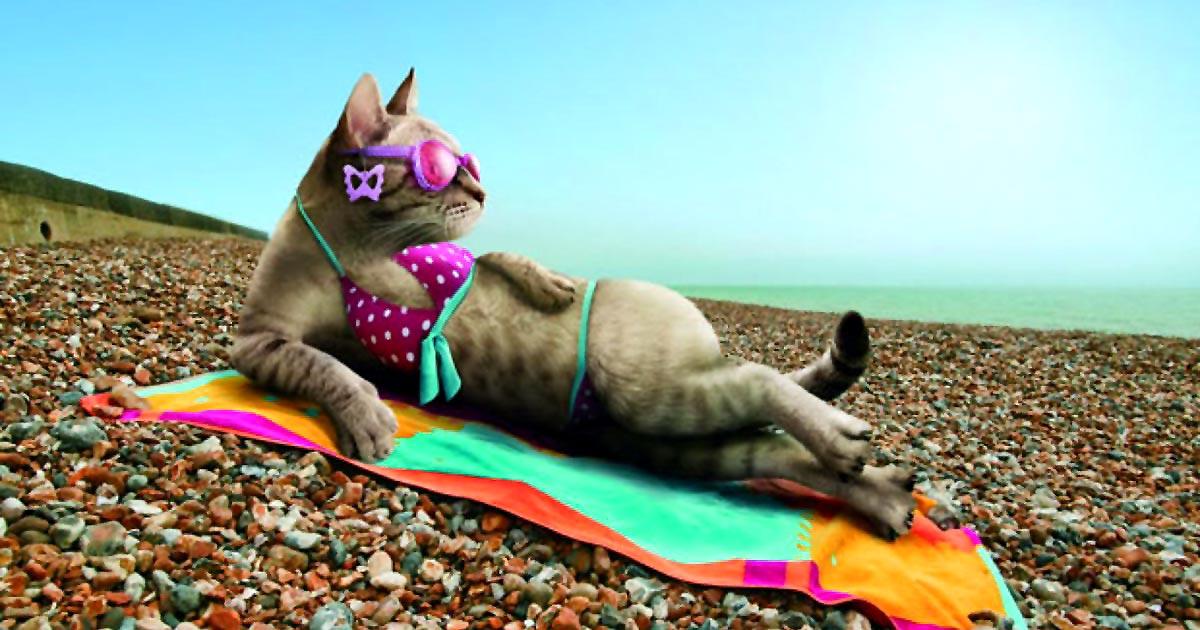 смешные картинки про лето отпуск один самых
